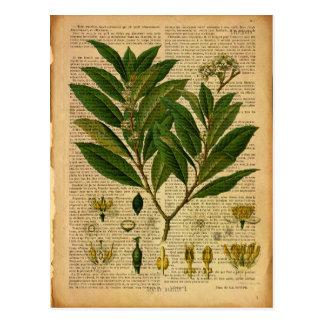 Botanischer Druck auf Seite des alten Buches Postkarte