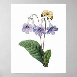 Botanischer Druck der BLAUEN GLOCKEN ursprünglich  Poster