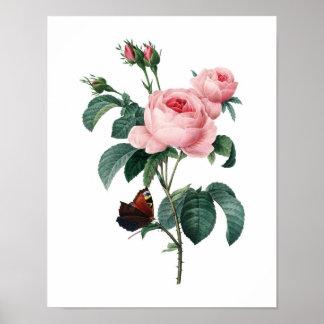 Botanischer Druck der ROSEN ursprünglich durch Red Poster