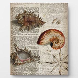 botanischer Druck Küstentritonshorn Vintagen Fotoplatte