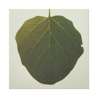 Botanisches Foto Leinwanddruck