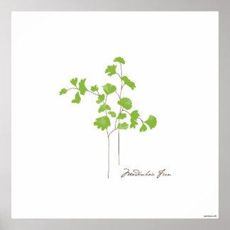 Botanisches Plakat der Maidenhair