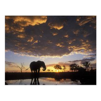 Botswana, Chobe Nationalpark, Elefant Postkarte