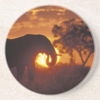 Botswana, Chobe Nationalpark, Stier-Elefant Getränkeuntersetzer