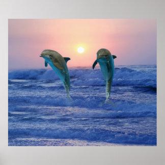 Bottlenose-Delphin am Sonnenaufgang Poster