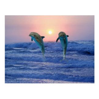 Bottlenose-Delphin am Sonnenaufgang Postkarte