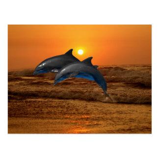 Bottlenose-Delphin am Sonnenuntergang Postkarte