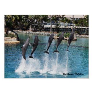 Bottlenose-Delphin Poster