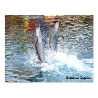 Bottlenose-Delphin Postkarte