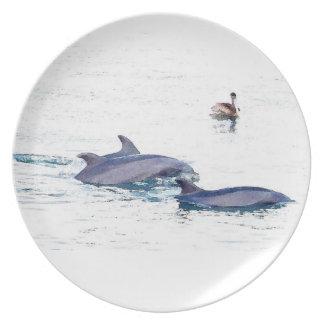 Bottlenose-Delphin-Tier-Tier-Ozean Teller