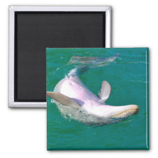 Bottlenose-Delphin umgedreht Quadratischer Magnet