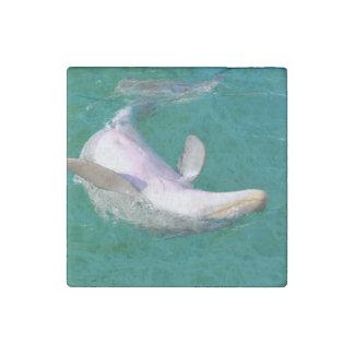 Bottlenose-Delphin umgedreht Stein-Magnet