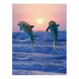 Bottlenose-Delphine am Sonnenaufgang Postkarte