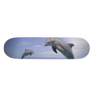 Bottlenose-DelphineTursiops truncatus) 4 Skateboarddeck
