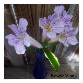 Bower-Rebe-Blumenblüten Poster