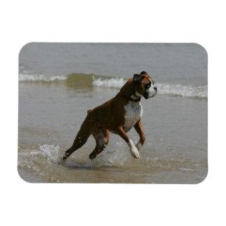 Boxer-Hund im Wasser Magnet