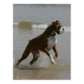 Boxer-Hund im Wasser Postkarte