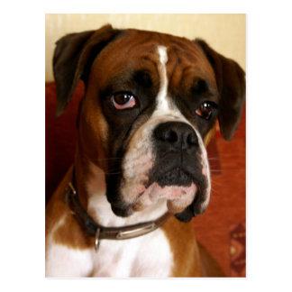 Boxer-Hund Postkarte