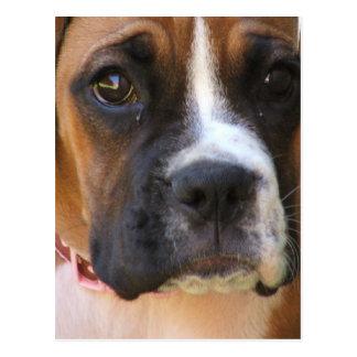 Boxer-Rettungs-Postkarte Postkarte