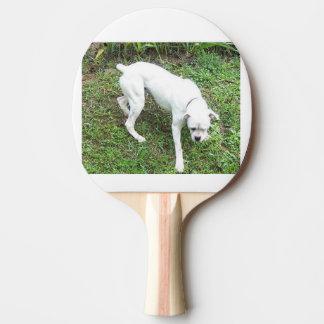 Boxer-weißer Welpe voll Tischtennis Schläger