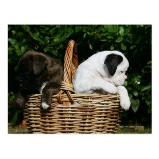 Boxer-Welpen im Korb Postkarte