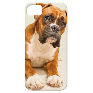 Boxerwelpe auf Elfenbeincremehintergrund Schutzhülle Fürs iPhone 5