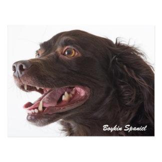 Boykin Spaniel-Foto-Postkarte Postkarte