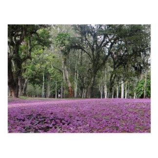 Brasilianische Blumentapisseriepostkarte Postkarte