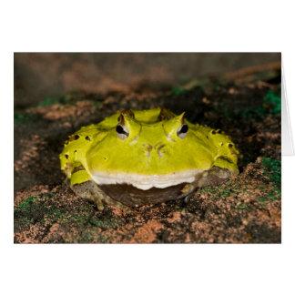 Brasilianischer Horn-Frosch, Ceratophrys cornuta, Karte