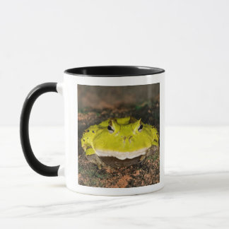 Brasilianischer Horn-Frosch, Ceratophrys cornuta, Tasse