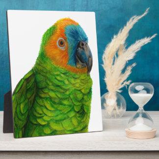 Brasilianischer Papagei Fotoplatte