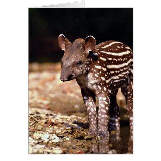 Brasilianischer Tapir, junges Kalb neben Fluss Karte