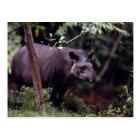 Brasilianischer Tapir (Tapirus terrestris) Postkarte