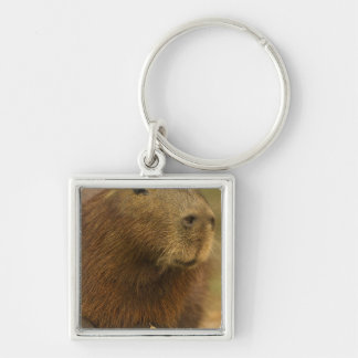 Brasilien, Pantanal, Mattoo Grosso. Capybara Silberfarbener Quadratischer Schlüsselanhänger
