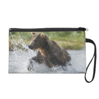 Braunbär, der Lachse im Fluss jagt