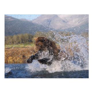 Braunbär, Grizzlybär, anziehende rosa Lachse, Postkarte