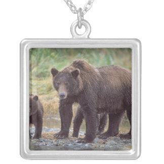 Braunbär, Ursus arctos, Grizzlybär, Ursus 3 Versilberte Kette