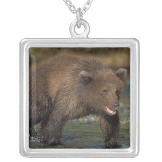 Braunbär, Ursus arctos, Grizzlybär, Ursus 6 Versilberte Kette