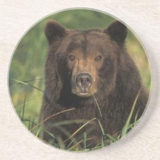 Braunbär, Ursus arctos, Grizzlybär, Ursus 9 Getränkeuntersetzer