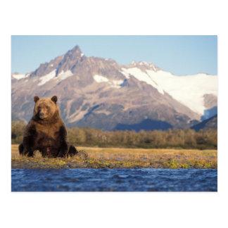 Braunbär, Ursus arctos, Grizzlybär, Ursus Postkarte