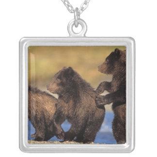 Braunbär, Ursus arctos, Grizzlybär, Ursus Versilberte Kette