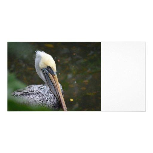braune Pelikankopfansicht, die rechten Vogel Individuelle Photo Karten