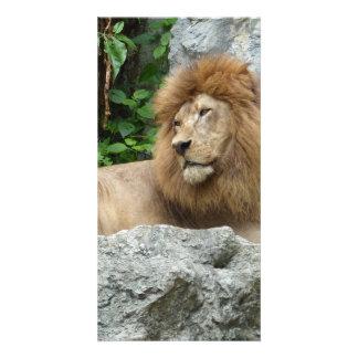 brauner männlicher Löwe mit der großen Mähne legt Foto Karten