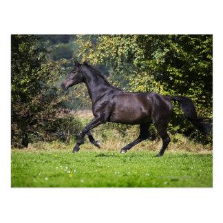 braunes Pferd, das auf Wiese läuft Postkarte