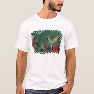 Breit-berechneter Kolibri, Cynanthus T-Shirt