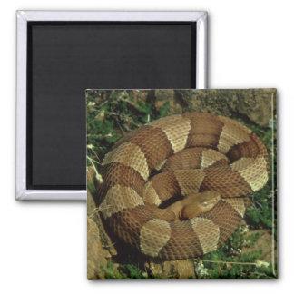 breit-mit einem Band versehener copperhead Quadratischer Magnet