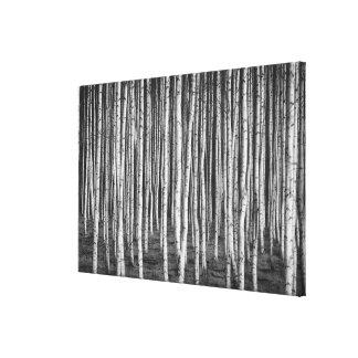 Brezový Waldungs-Birkenbäume, Russland Leinwanddruck