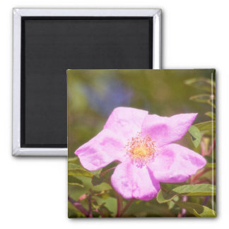 Briar-Rose Quadratischer Magnet