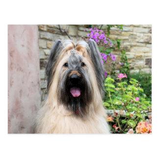 """Briard Hund in einer Tiara """"Bienenkönigin """" Postkarte"""