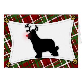 Briard Ren-Weihnachtskarte Karte